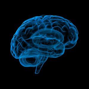 Få mere viden om melatonin niveau i hjernen